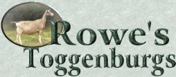 Rowe's Toggenburgs